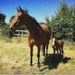 Unique and her foal 'Simply Dior'