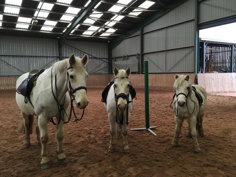 meet the riding school ponies